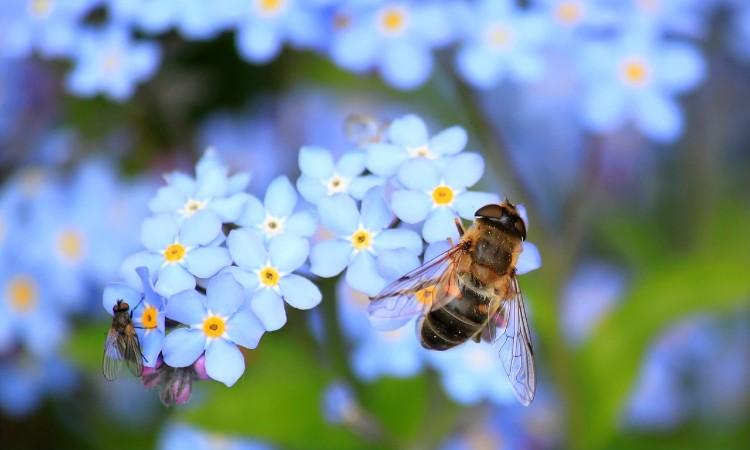 A méhek napja - április 30.