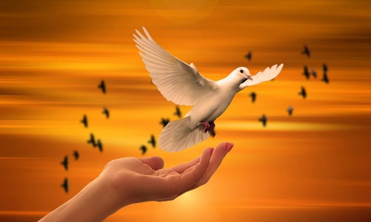 Olvass online! - ENSZ békefenntartók nemzetközi napja - Magyar békefenntartók napja