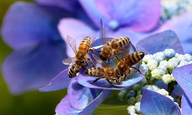 Aktuális kulturális - A méhek világnapja