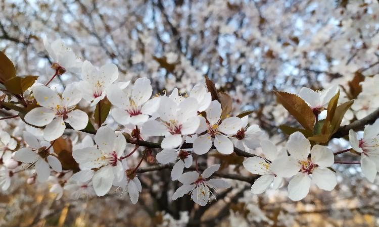 Tavaszi ünnepek március 21-én